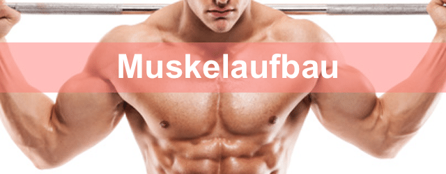 Muskelaufbau Muskeltipps